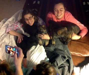 Our puppies being family...now that is socialization.